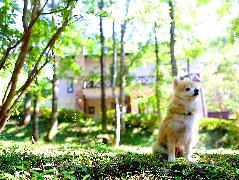 当館1番人気♪愛犬と一緒に那須でゆったり【1泊2食プラン】